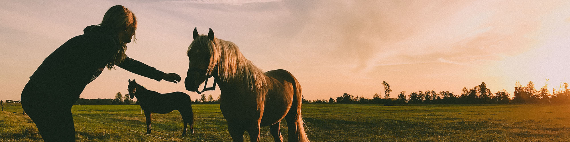 equine therapy horses